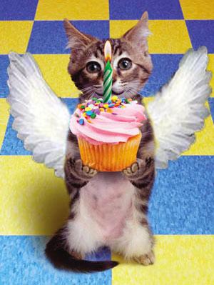 AngelKitty Birthday Cupcake Huggles