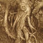 Tree Print Succubus by Retagene Hanslik